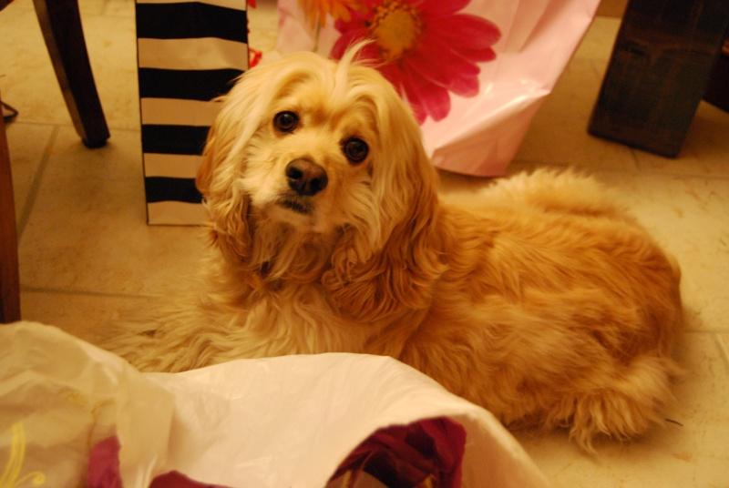 """Concours de la photo de chiens la plus """"belle"""" Dsc_0122"""