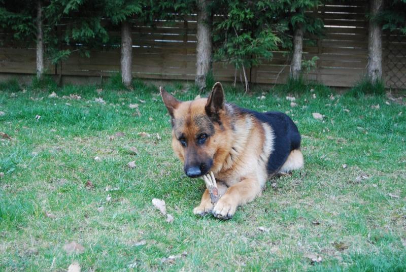 """Concours de la photo de chiens la plus """"belle"""" Dsc_0123"""