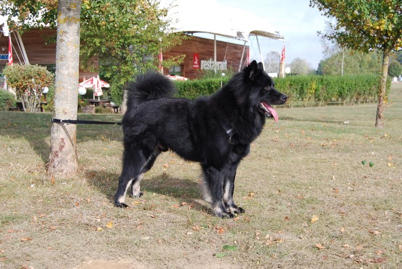 Nos loups grandissent, postez nous vos photos - Page 2 Dsc_0412