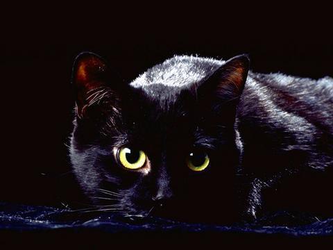 les chats noirs H-20-110