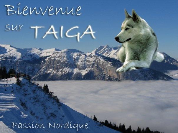 Concours: le plus beau design pour Taiga Hivert10
