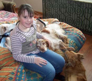 Micky, épagneul breton, 12 ans (Nord) cherche une famille Visite10