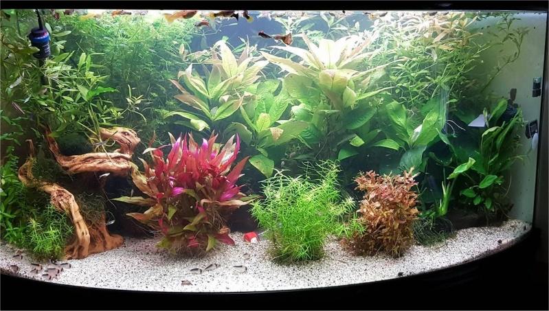 Mon aquarium , quel changement. Merci les amis du forum  !!! Aqua_f10