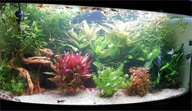 Mon aquarium , quel changement. Merci les amis du forum  !!! Aqua_f11