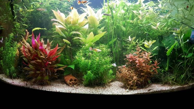 Mon aquarium , quel changement. Merci les amis du forum  !!! Fin_ma10
