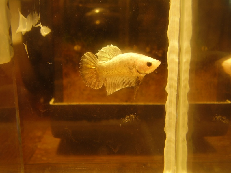 pk white platinium Male410