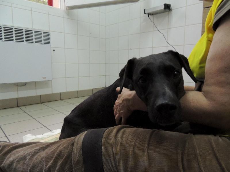 Coup de gueule- GAÏA, petite chienne paralysée déposée sur une place... Dimanc51