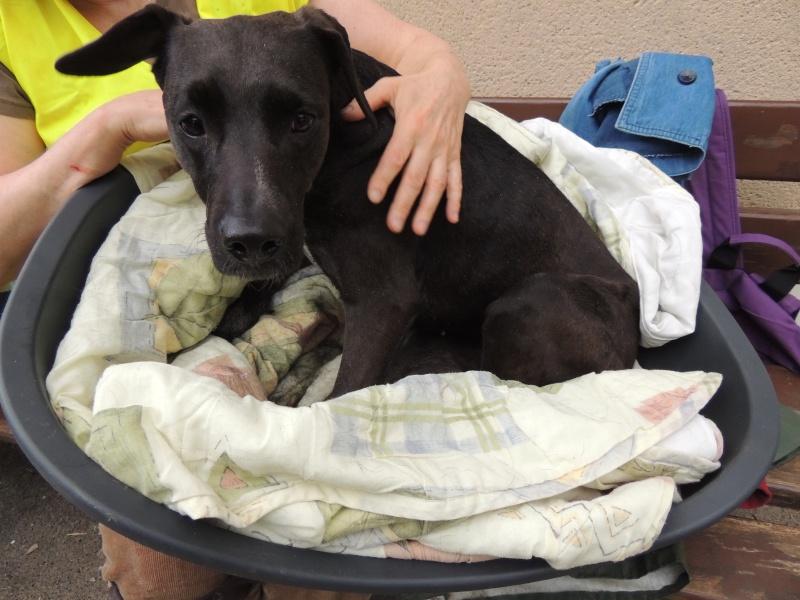 Coup de gueule- GAÏA, petite chienne paralysée déposée sur une place... Dimanc52