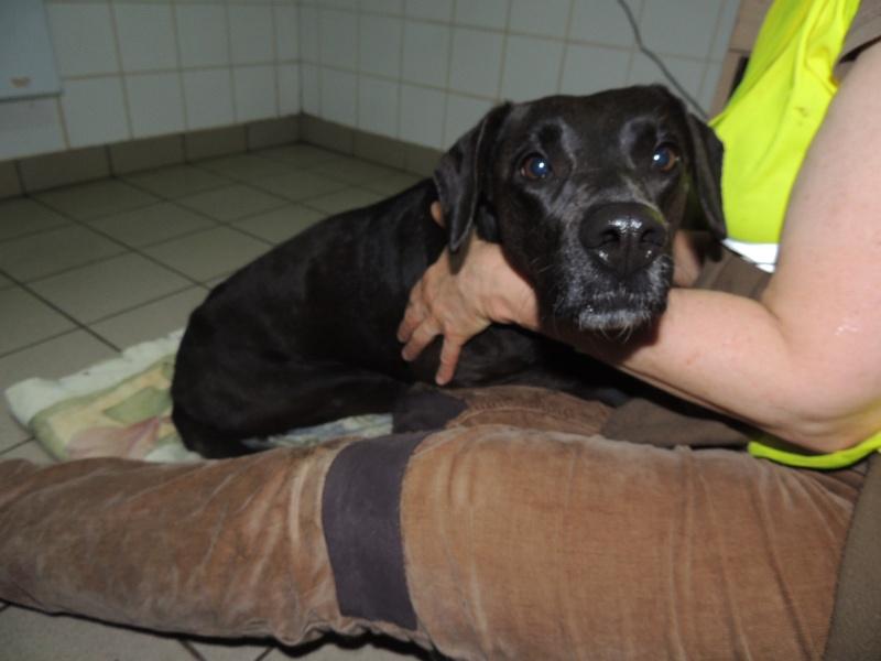 Coup de gueule- GAÏA, petite chienne paralysée déposée sur une place... Dimanc53