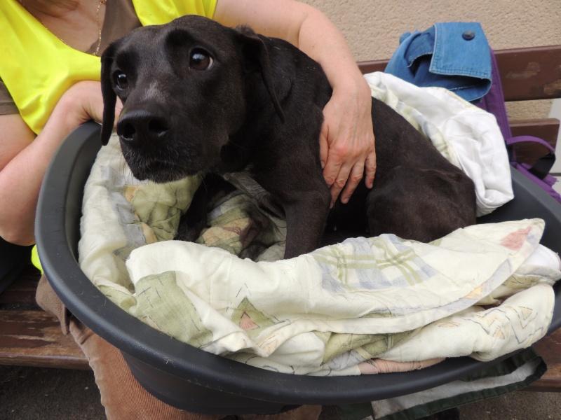 Coup de gueule- GAÏA, petite chienne paralysée déposée sur une place... Dimanc55