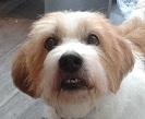 Papotage sur les chiens qui bénéficient de l'Opération Doyen - Page 4 Pataud10