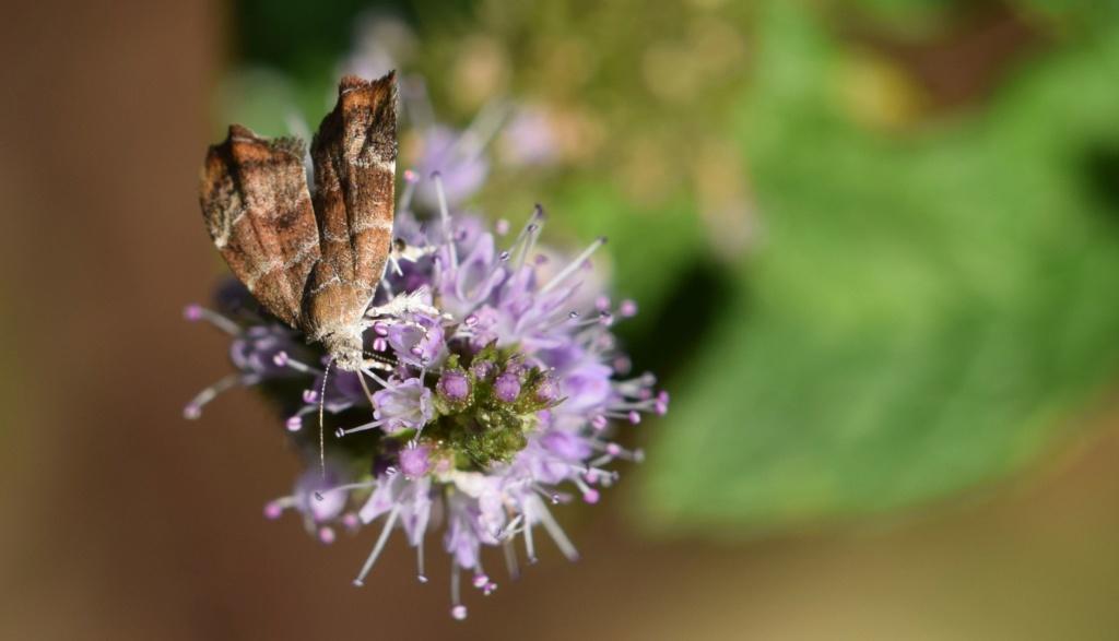 Choreutidae 07-28-12
