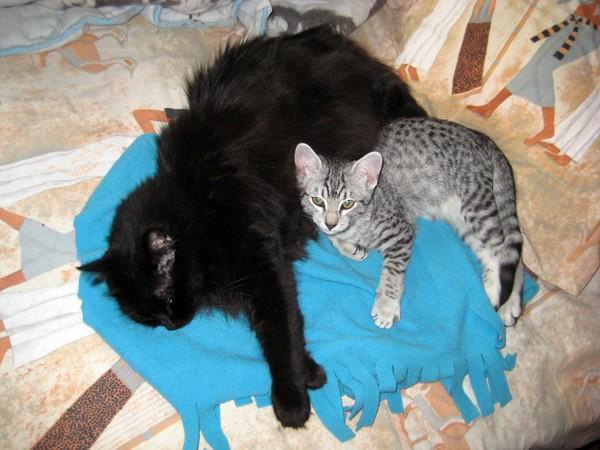 E'Sethi Accuente, le chaton voyageur Kemtse10