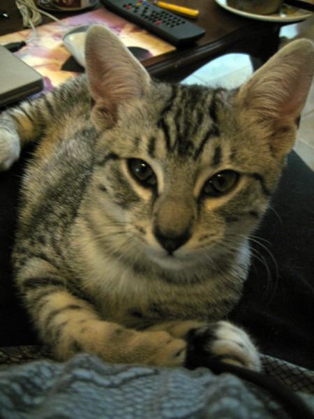 E'Sethi Accuente, le chaton voyageur Sethi-10