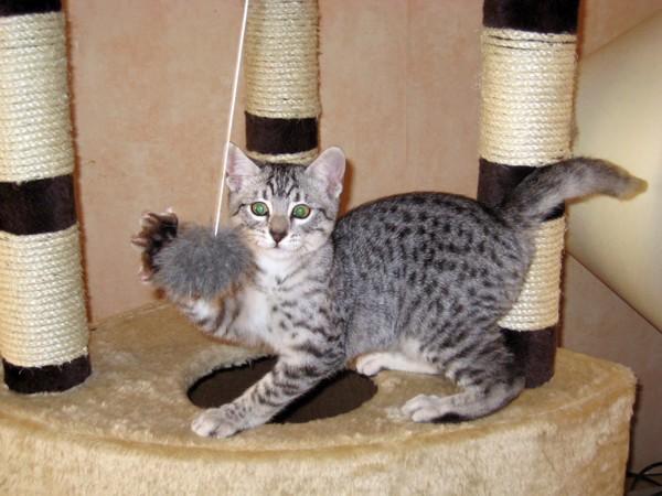 E'Sethi Accuente, le chaton voyageur Sethib11