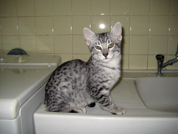 E'Sethi Accuente, le chaton voyageur Sethie10