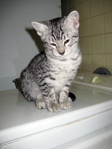 E'Sethi Accuente, le chaton voyageur Sethim10