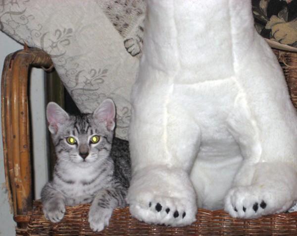 E'Sethi Accuente, le chaton voyageur Sethin10