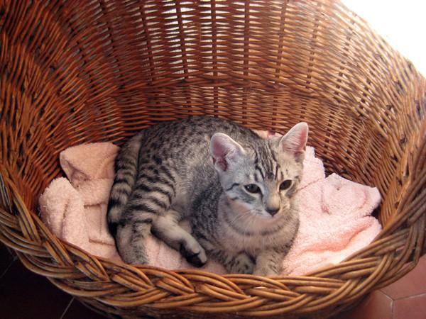 E'Sethi Accuente, le chaton voyageur Sethip11