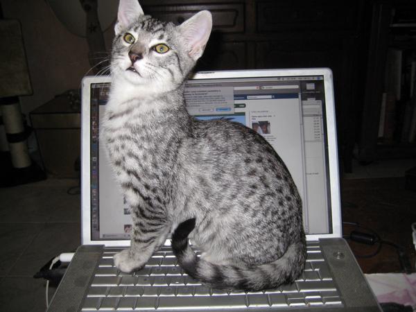 E'Sethi Accuente, le chaton voyageur Sethit10