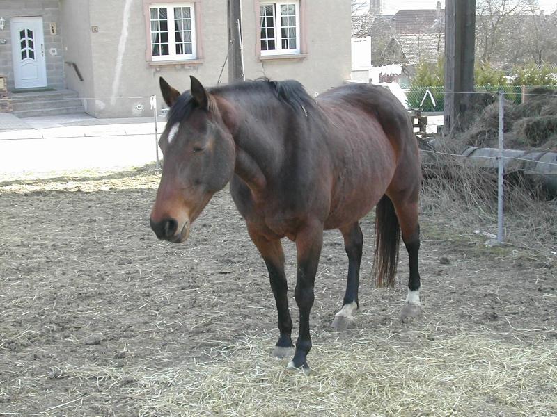 Une photo de vous et votre cheval - Page 5 Eglant10