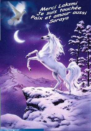 Les LICORNES Licorn13