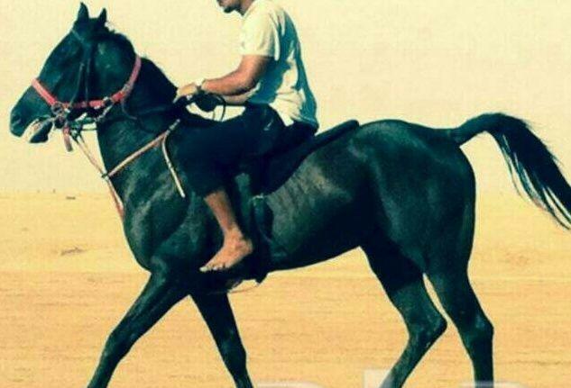 حصان ممكس جميل و قوي للبيع  1279