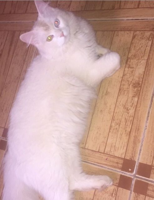 قطط صغيرة للبيع 2016 1322