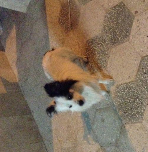 كلب فرنسي جميل و لعوب للبيع  2148