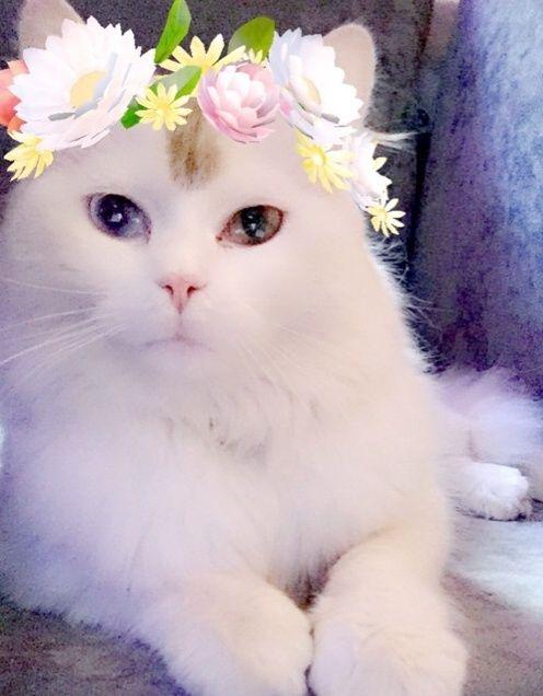 قطط صغيرة للبيع 2016 2278