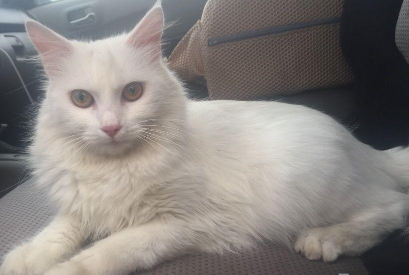قطه جميلة ولعوبه للبيع بأبها   247