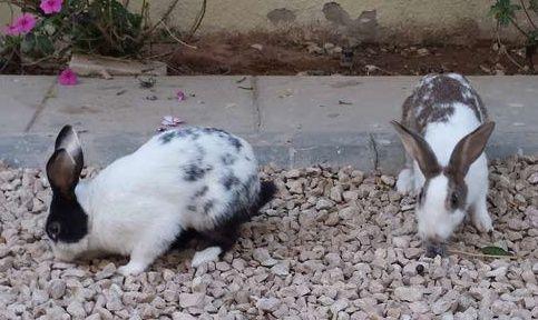 ارانب للبيع حراج Aaaaa10