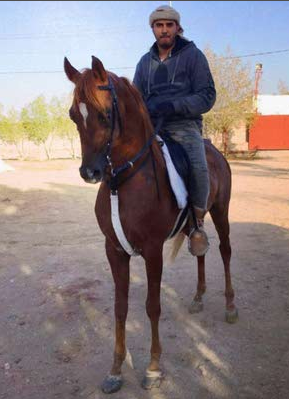 للبيع حصان عربي اصيل Captur10