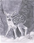 Belisity's Second fawn Fawn_b10