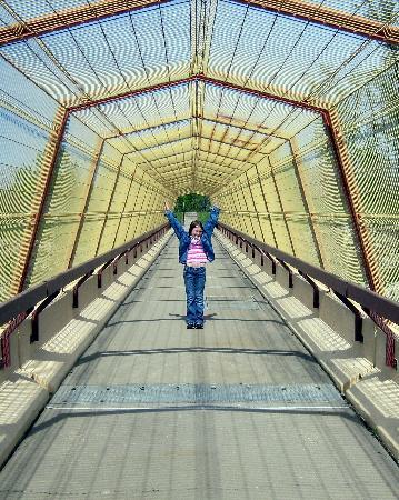 Un souhait, une image Bridge10