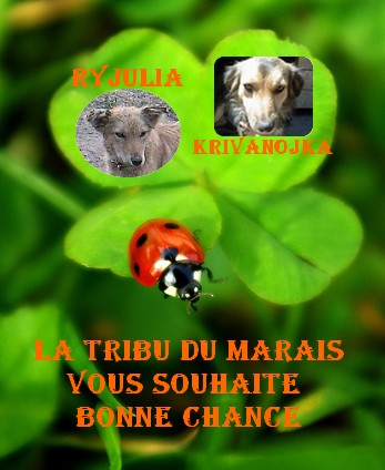 KRIVANOJKA - FEMELLE PARRAINEE PAR la tribu du marais(Tina) - ENFUIE DE CHEZ VASILE Cadre_10
