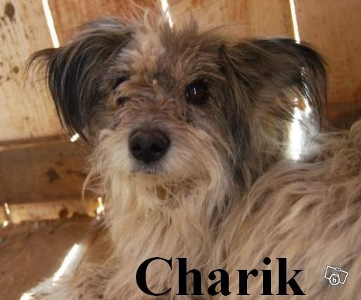 CHARIK MALE PARRAINE PAR PHILOU - MORT CHEZ VASILE Charik12