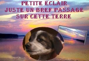 Eclair, petit chiot (femelle) chien de tina Deces_10