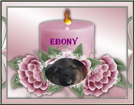Ebony, petite fille 6 semaines(Tina) - Page 2 Ebony11