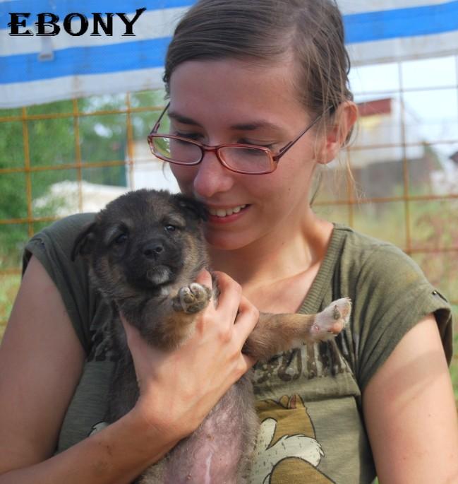 Ebony, petite fille 6 semaines(Tina) Ebonyt11