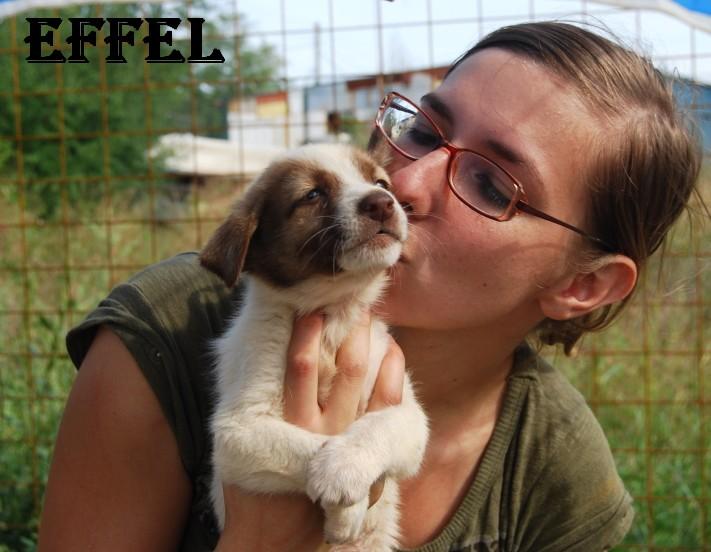 Effel, petit male 5 semeaines(Tina) Effel410