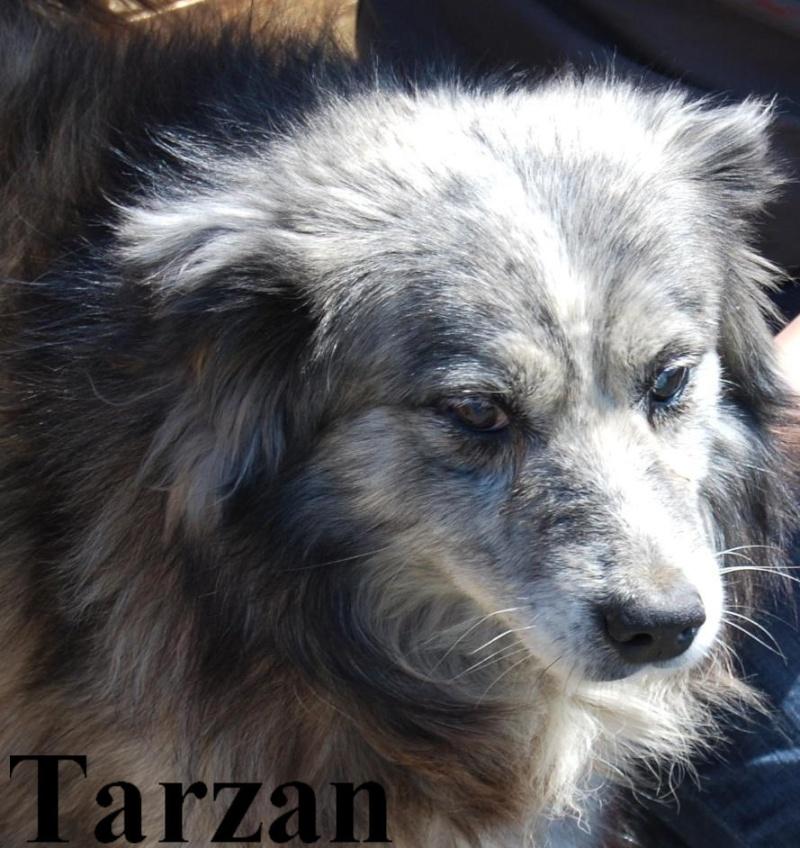 TARZAN MALE PARRAINE PAR ZAZA09 - MORT CHEZ VASILE Tarzan13