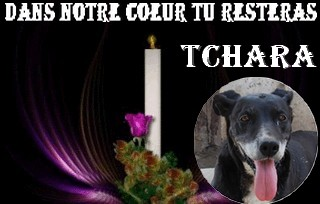 TCHARA FEMELLE PARRAINEE PAR BOUDCHOU(Tina) - Page 2 Tchara13