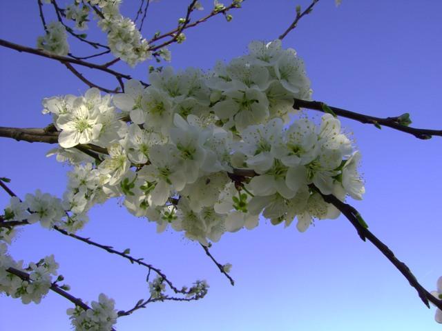 La photo du mois de Mai 09_03_14