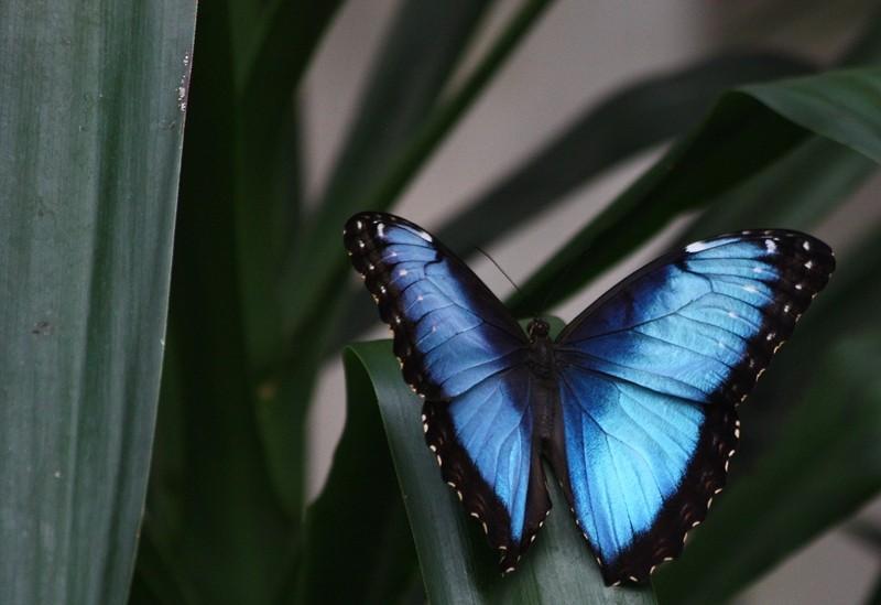 Sortie photo aux jardins des Papillons à Grevenmacher (L) 04 AVRIL 2009 - Les photos Img_4211