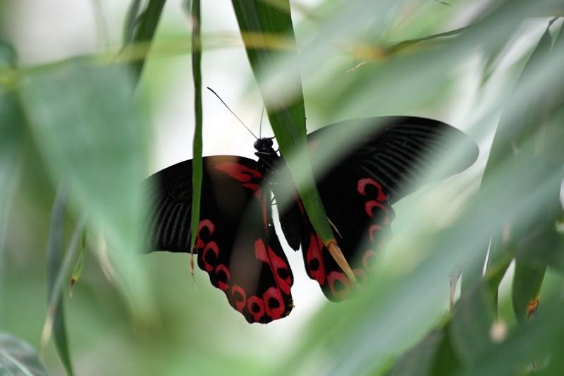 Sortie photo aux jardins des Papillons à Grevenmacher (L) 04 AVRIL 2009 - Les photos Img_4212