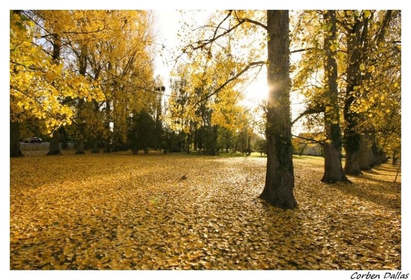 L'automne..... Img_6217