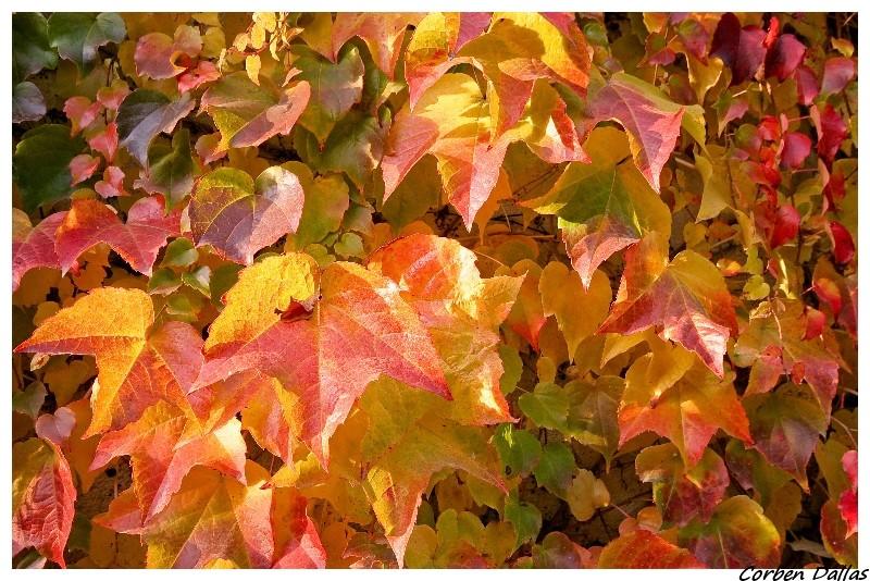 L'automne..... Img_6218