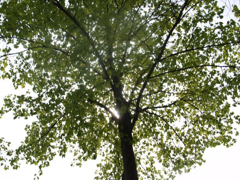 Fotoprojekt - Bäume Baum210