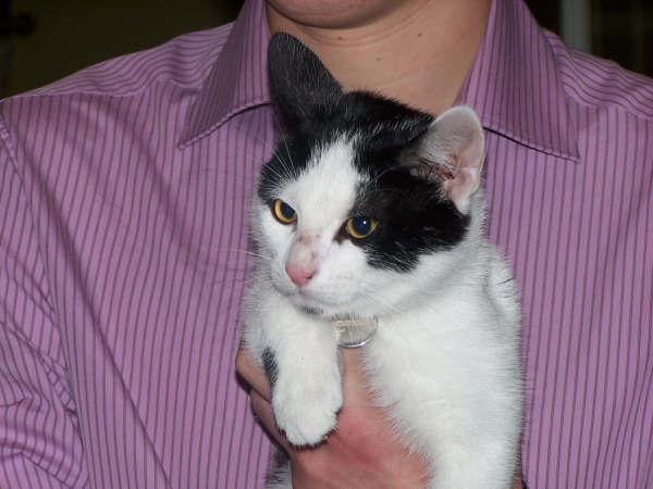chat perdu à Armentieres dans le Nord 102_2910